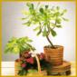 Lichtmangel bei Zimmerpflanzen, wichtige Faktoren