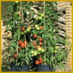 Obst und Gemüse auf dem Balkon, Gemüseanbau