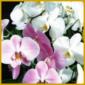 Orchideen zum Blühen bringen, Hintergrund Wissen