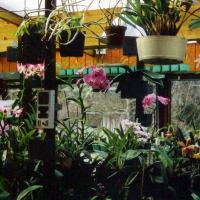 Orchideenkrankheiten
