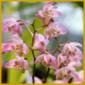 Orchideenzucht, Orchideen kann man ausgezeichnet im Keller ziehen