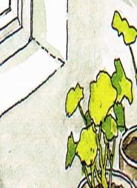 Pelargonien