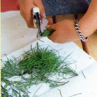 Pflanzenjauchen