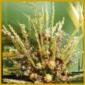 Trocknen von Pflanzen z.B. für schöne Trockensträuße