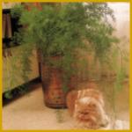 Haustiere und Zimmerpflanzen, allerlei grüne Gefahren