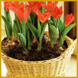 Ausgefallene Pflanzgefäße für Ihre Zimmerpflanzen