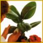 Pflege bei Zimmerpflanzen, ist die erste Voraussetzung