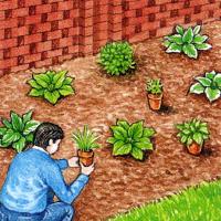 Randbepflanzung in Grün