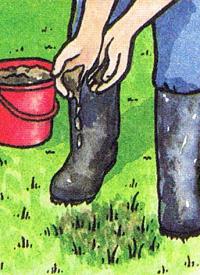 Rasen pflegen
