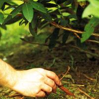 Pflanzenkrankheit Rost