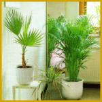 Grünpflanzen im Schlafzimmer, Verbesserung der Atemluft
