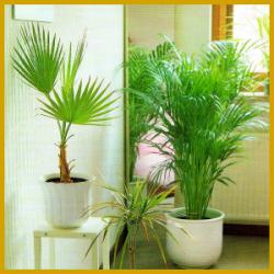 Grünpflanzen Im Schlafzimmer : gr npflanzen im schlafzimmer verbesserung der atemluft ~ Watch28wear.com Haus und Dekorationen