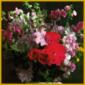 Schnittblumenpflege, die richtige Pflege der Schnittblumen