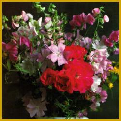 Schnittblumenpflege, Pflege der Schnittblumen
