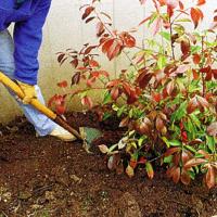 Verpflanzen