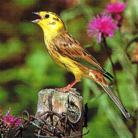 Vögel, Nützlinge im Garten