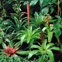 Zimmerpflanzen Gruppen kombinieren, hat nur Vorteile