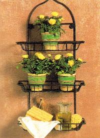 Standort für Zimmerpflanzen